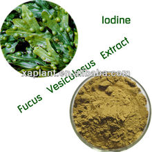 Free Samples Fucus Vesiculosus Extract