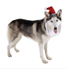 Best Selling Products Santa Hat Pet Accessory
