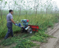 whole stalk sugar cane combine harvesting machine