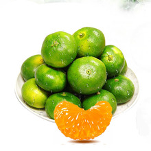 Early mandarin and seedless newhall navel oranges