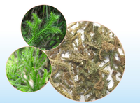Traditional Chinese medicinal decoction pieces Common clubmoss Herb