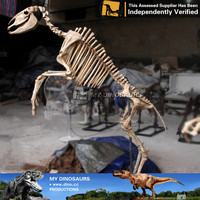 My-dino models scale animals skeleton for museum