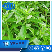 Factory direct sales pure stevioside stevia wholesale prices