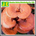 High quality Ganoderma P.E