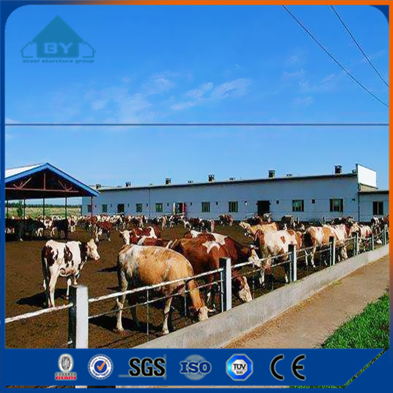 BY N003 Professional Design Steel Structure Cow Farm House