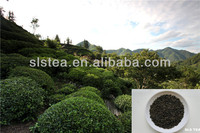 algerie EXTRA FINE CHUNMEE TEA 4011 by the leading green tea manufacturer in China