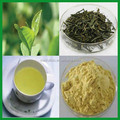 Instant Green Tea Powder Certified with HACCP/ ISO/ HALAL/ KOSHER