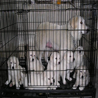 dog kennel fence panel,Dog cage / pet cage / pet home