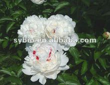 Total Glucosides of Paeony (TGP) 40% HPLC