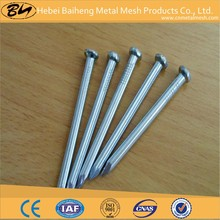 hebei baiheng supplies high quality concrete nail