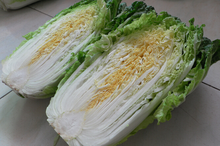 high quality cabbage vegetables supplier in china supply fresh chinese cabbage
