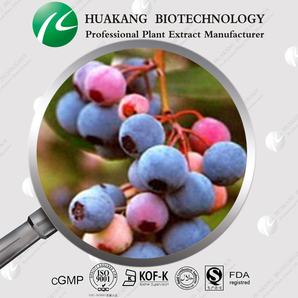 European bilberry Extract natural anthocyanidins Supplement , factory supply Bilberry Extract, anthocyanidins 5%-36%