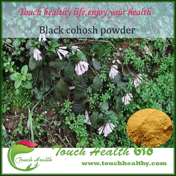 Touchhealthy supply Organic 8% Triterpene Glycosides Black Cohosh root Extract,black cohosh