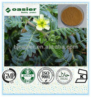 Natural Manufacturer Supply tribulus terrestris Extract Sex Drugs