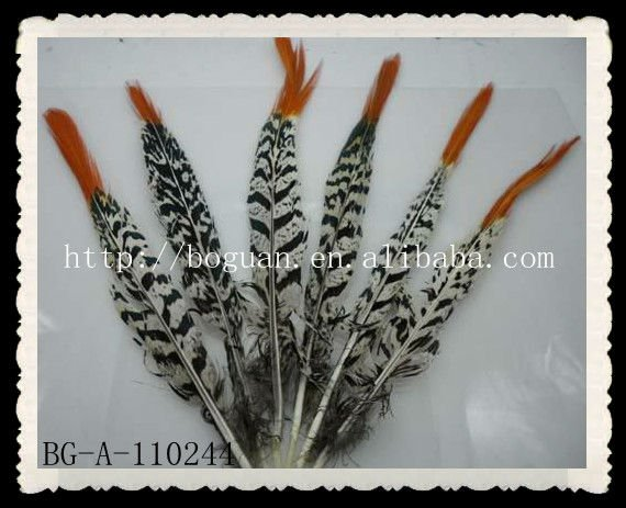 New natural pheasant tail feather