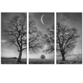 "Black and White Picture Tree Photo Canvas Art Home Wall Decoration Landscape Canvas Prints(12""x24""x3PCS) Ready to Hang"