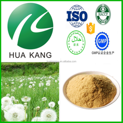Natural dandelion root extract,dandelion extract benefits,dandelion fountain powder