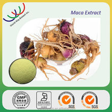 GMP factory making high quality sex medicine maca root extract,organic maca extract