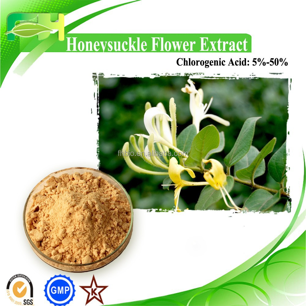 100% Natural Lonicera Confusa P.E, Honeysuchle Flowers Extract, Chlorogenic Acid