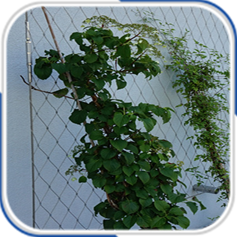 Architectural surface plant climbing stainless steel wire