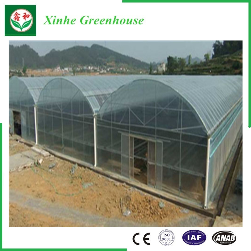 Agriculture/Commercial Plastic Film Tunnel Green Houses for Strawberry/Rose
