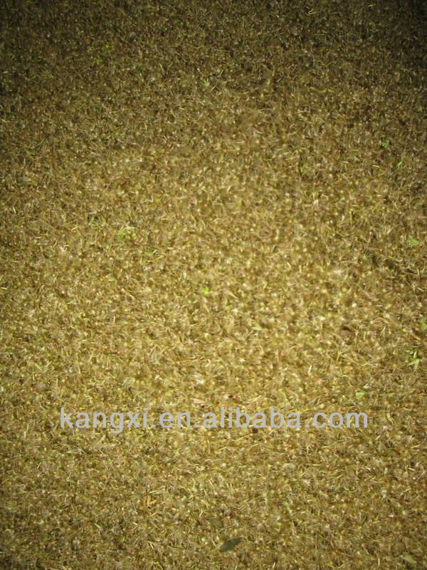 High purity and sprout rate stevia seeds