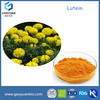 Marigold Extract Powder/Food supplement from Manufacturer/Lutein