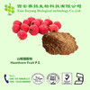 Professional Manufacturer High Quality Hawthorn Fruit P.E.