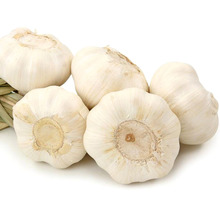 Good Quality Fresh Big Size Europe Garlic