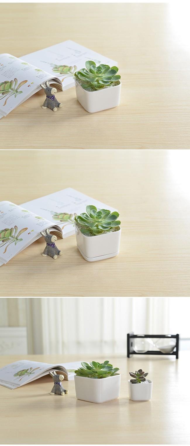 Indoor Rectangular White Mini Ceramic Pots For Succulent