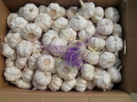 6cm head garlic/natural garlic/single garlic