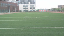 Cheap Outdoor Natural Plastic Artificial Grass For Soccer