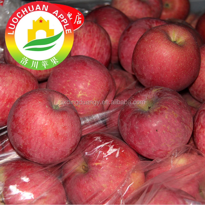 2017 High quality shaanxi exports red royal gala apple