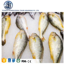 Wholesale seafood frozen fresh high quality yellow croaker