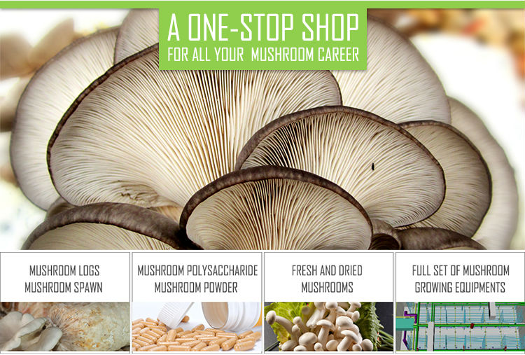 Health Food Oyster Mushroom Block Shape For Cultivating