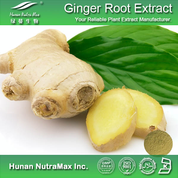Pure and Water Soluble 1% Gingerol Ginger Root Extract