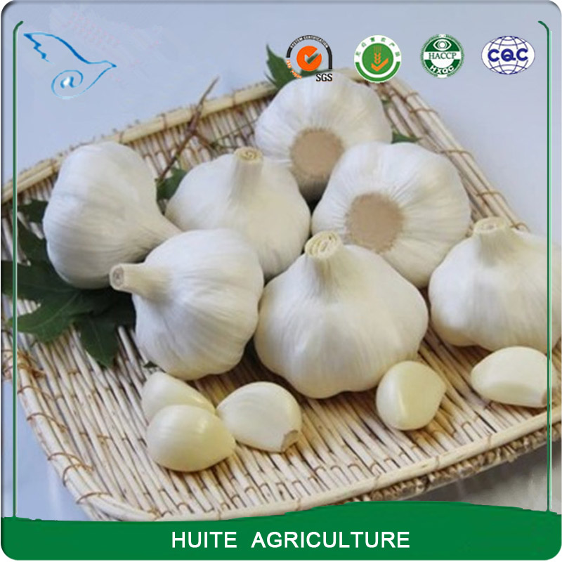 fresh normal pure white garlic with great price