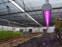 80Watts IP 65 waterproof led grow lights for greenhouse