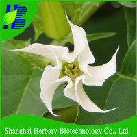 2016 Hot sale datura seeds for growing