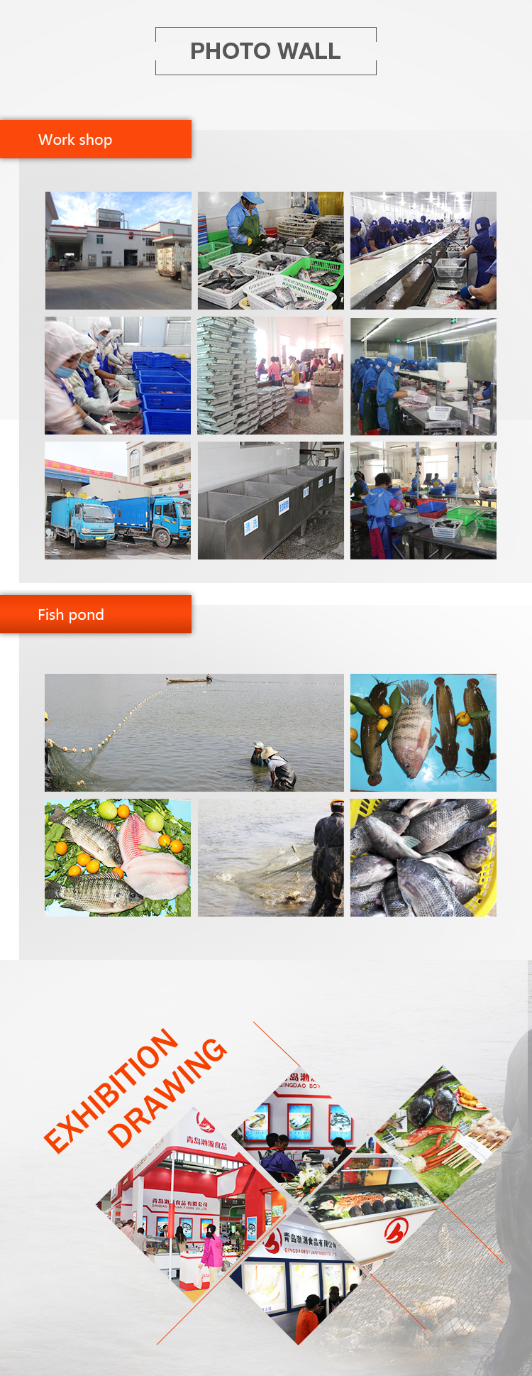chinese factory big quantity tilapia whole round frozen fish