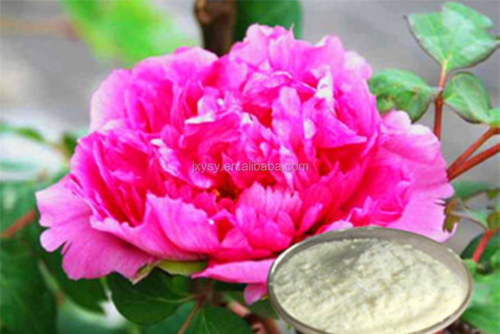 GMP Approved Pure Peony Bark Extract Paeonol 99% CAS NO.:552-41-0