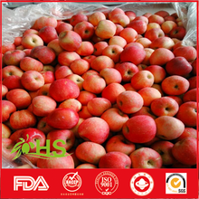 High quality fresh red star apples for wholesale