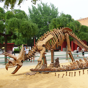 Real simulation dinosaur head skeleton