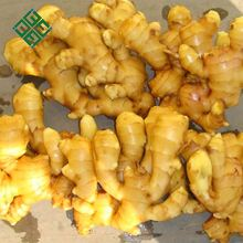 fresh ginger exporter ginger price in china