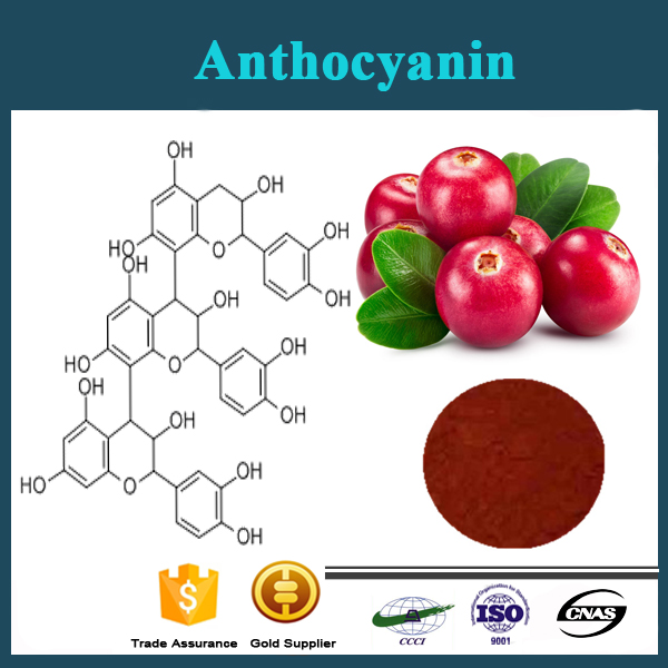 100% Natural Plant Extract 25% anthocyanins Bilberry Extract