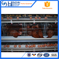 chicken farming equipment/automatic layer chicken cage system for sale