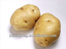 fresh vegetable potato from China