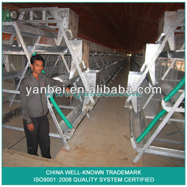 9WCD-3198 A-type Hot Galvanized Pullet Chicken Cage