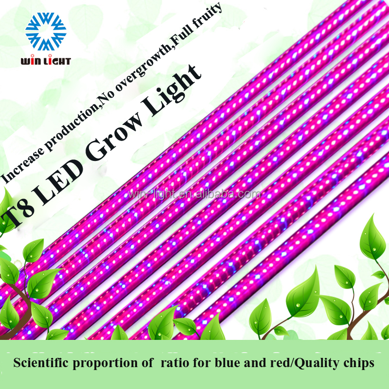 China supplier red and blue 5ft t8 led grow tube light for peper