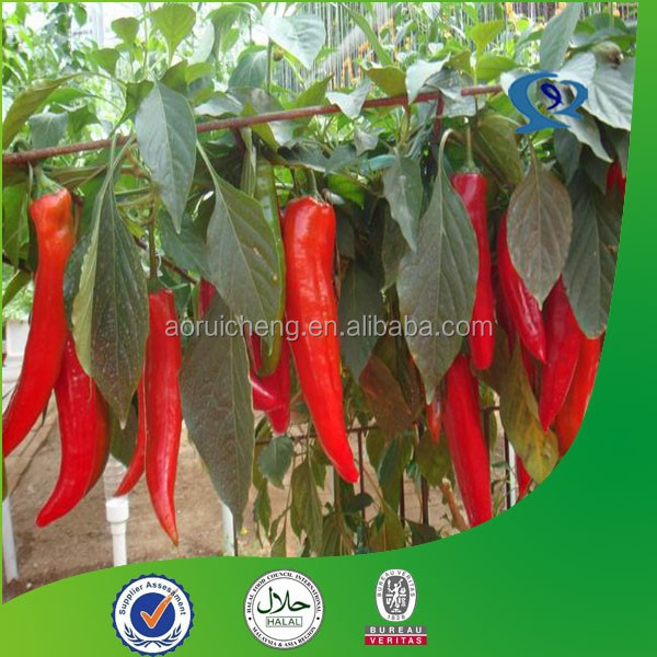 cosmetic active ingredients/hot pepper extract/capsicum extract powder
